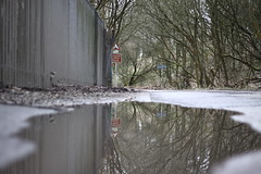 Reflection (harry.1967) Tags: road uk trees england sign puddle 50mm britain gb stalybridge ef50mmf18 andrewlee 50d niftyfifty tameside sooc canon50d heyrod niftyfiftyfriday