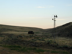 or395136 Grassland Farm in Eastern Oregon 2001 (CanadaGood) Tags: 2001 morning blue usa color colour windmill oregon america sunrise dawn farm agriculture grassland 2000s highway395 canadagood