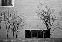 profile of a tree