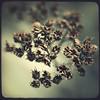 after nature (-justk-) Tags: winter copyright flower nature spring seed dry end remains pods ttv eluvium wonderfulworldofflowers ttvdlsdesignsthanks allmyimagesarecopyrighted©allrightsreserveddonotusecopyandeditmyimageswithoutmypermission