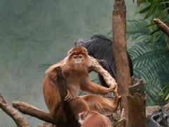 My Domain (Eraser Assassin) Tags: monkey bronxzoo