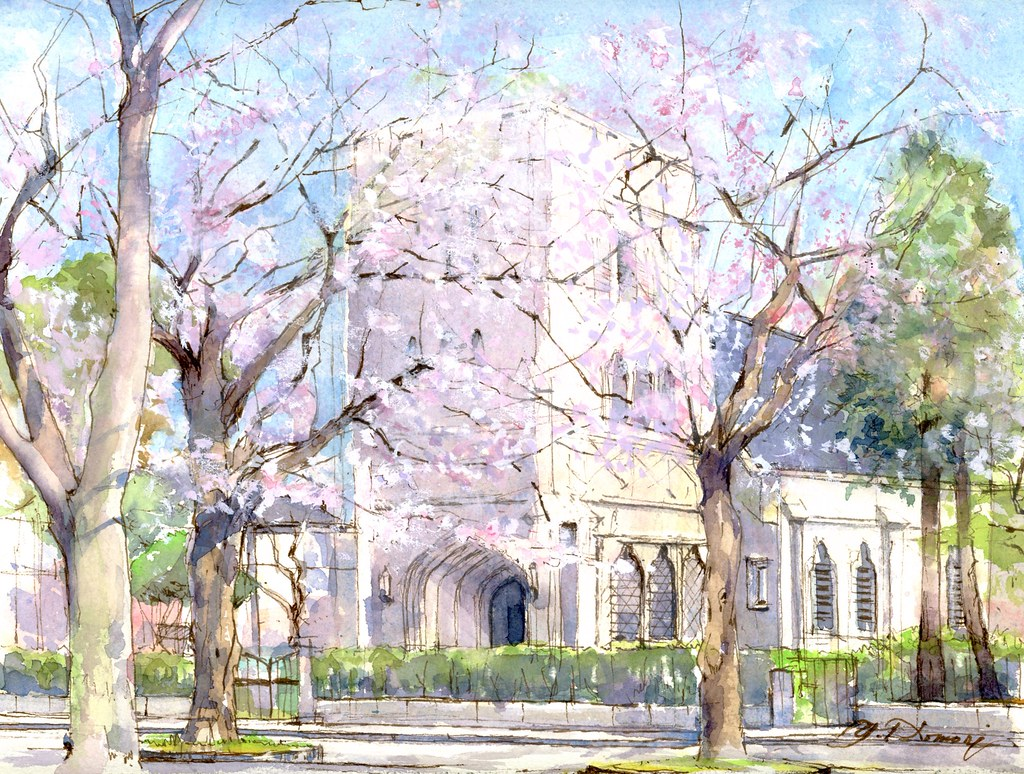 CHERRY  TREES  (Episcopal Cathedral,  Yokohama)  満開の桜(山手聖公会)  by Yuzo Komori