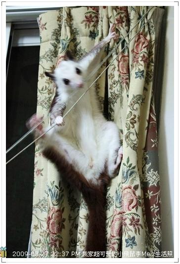 09年二三月小飛鼠Meiz生活照 (24)