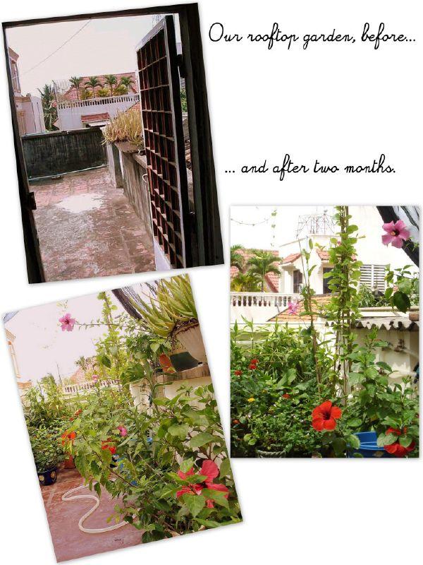 Ang rooftop garden sa dati naming bahay sa Boengkengkang area noong