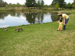 Emma and the geese