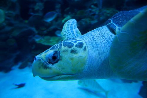 Lawatan Sambil Belajar ke Aquaria by baliomegatron.