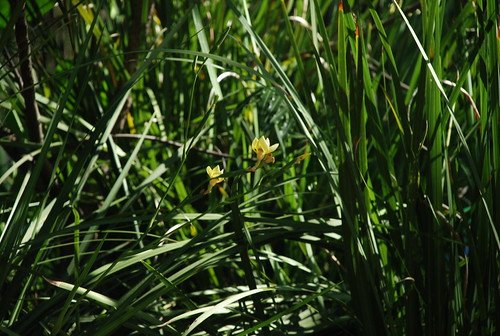 yellow blooms in the green