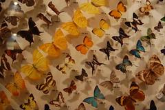 Butterflies gallery @ Western Australian Museum