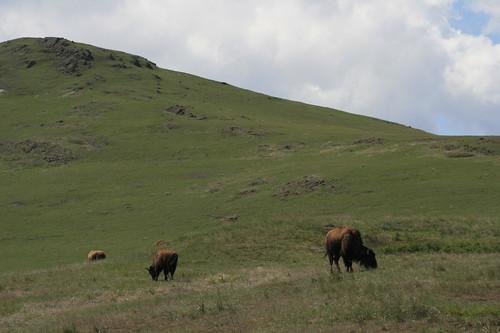 bison_range_20090510_128