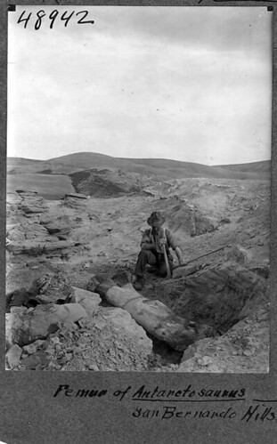 John B. Abbott excavating dinosaur femur