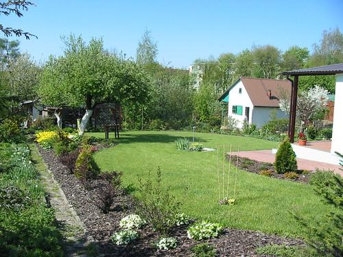 trawnik i iglaki