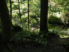 deep green (wolf8_us) Tags: trees oregon travels oregoncoast oswaldstatepark