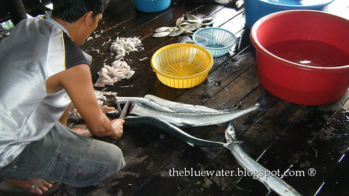 Kelong Acheh Fish Cleaning