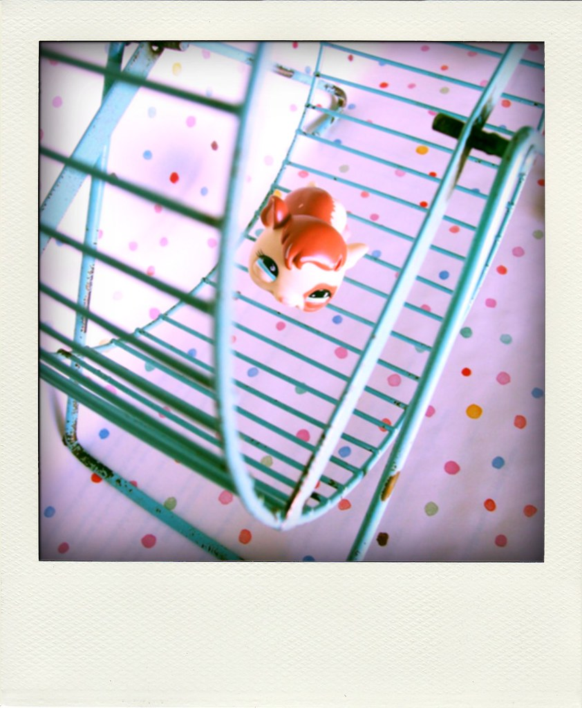 Poladroid Pet Shop Fun