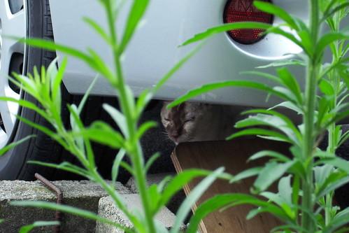 Today's Cat@20090703