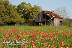Barn and Paintbrushes
