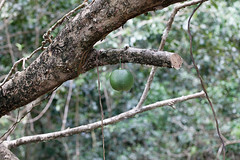 baudchon-baluchon-costa-rica-cahuita-34