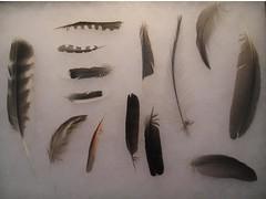 Urban feather collecting (Baltimore Bob) Tags: bird birds feathers feather baltimore wymanpark