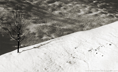 despre alb ca zapada (VI)