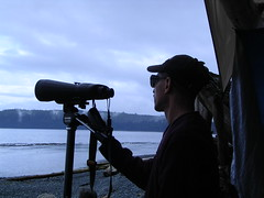 Troy looking for whales (maureenlafleche) Tags: pacificocean whalewatching malcolmisland berepoint