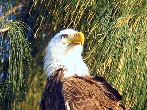 Eagle Head 20090302