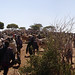 The Borana: livestock market panorama