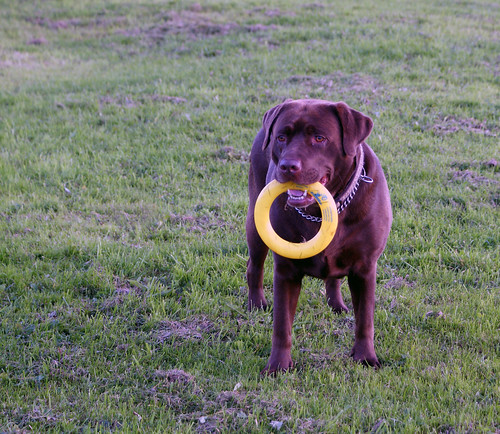 Ruby with hoop