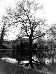 Dreamy (KarolusLinus) Tags: park trees bw white black building reflections pond bomen belgium zwartwit belgi zwart wit ghent gent gebouw vijver citadelpark reflecties blackwhitephotos