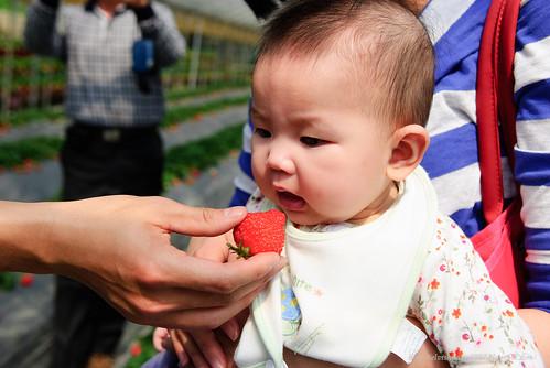 [8M] 內湖採草莓