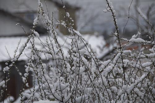 春の雪 / spring snow