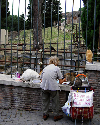 05.2006 Rome, Forum cats