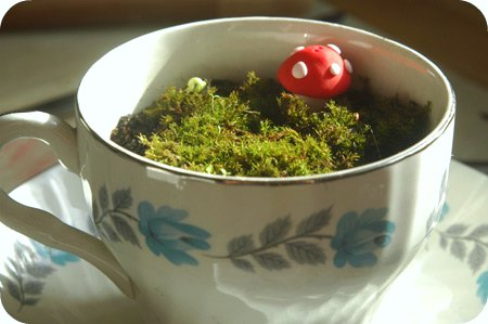teacup moss