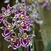 BotanicalGardenOrchids-32