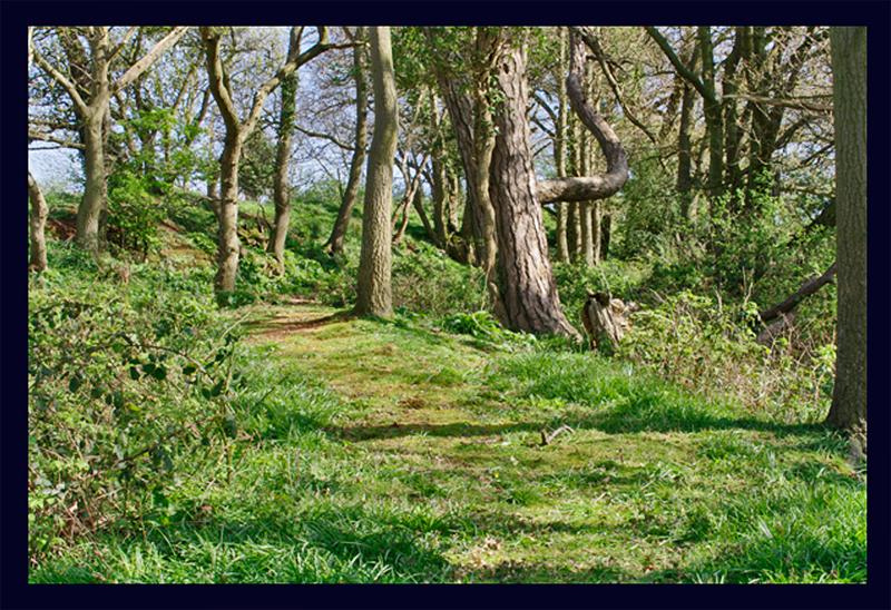 Devon Wood