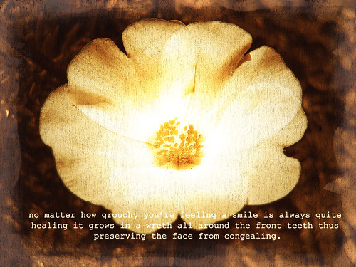 images of flowers with quotes. images of flowers with quotes.