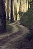 (Syka Lê Vy) Tags: trees forest landscape vietnam vy 2008 dreamer sleepwalker lê syka vắng ilostsomethinginthehills ineednotprepareforanewcomingday fromsykawithlove sykalevy lehoangvy sundayspirit