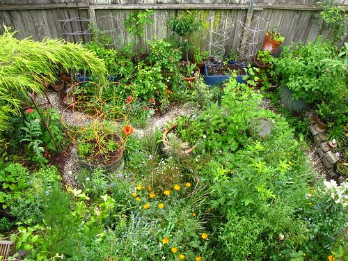 2009-05-06 garden
