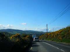 Driving home (St.Stello) Tags: ireland pinky gorse cowicklow