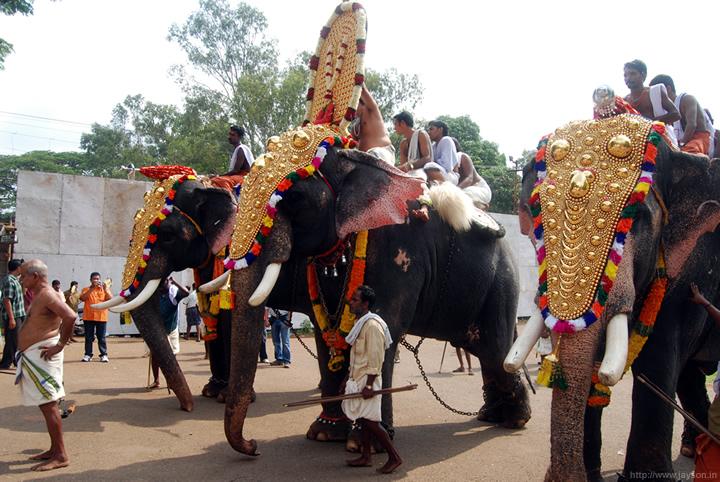 Poorams at Vadakkunnathan  - elephant processions arriving at vadakkunnathan