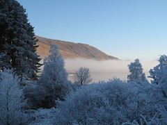 IMG_0220 (snapsunlimited) Tags: trees scotland frosted clunie scotchmist