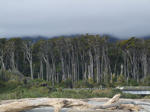 New Zealand: trees and clouds