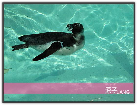 愛寶樂園(動物篇)03