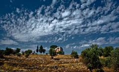 Mediterraneo (Cardellicchio's) Tags: trees sky italy panorama house plant abandoned nature clouds canon landscape mediterraneo ruin puglia bari bulding apulia rebelxs macchiamediterranea mediterraneanscrub eos1000d