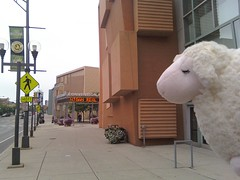 sheep of convention