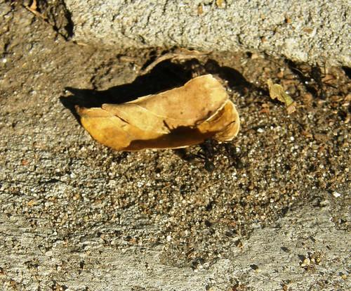 hormigas 1