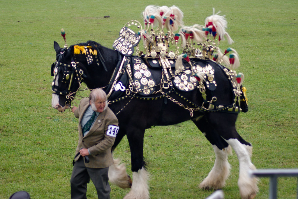 Decorated and working horse event