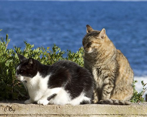 Cats and the Sea