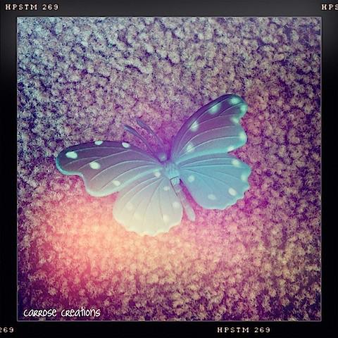 {365} 145 Butterfly