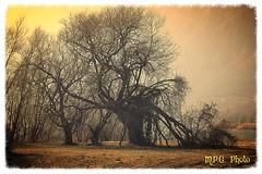 VECCHIO ALBERO (M.P.G. Photo Monduzzi Paolo Giuseppe (Italy)) Tags: alberi autofocus idro baitoni mpgphoto flickrstruereflection1 flickrstruereflection2 flickrstruereflection3 flickrstruereflection4