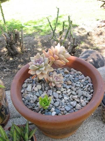 2009-03-16 108 (Small)